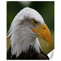 Bald Eagle (2) Canvas 11  X 14  (unframed)