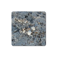 Sea Shells On The Shore Magnet (square)