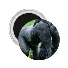 Gorilla Dad 2 25  Button Magnet