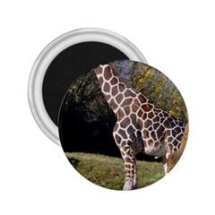 giraffe 2.25  Button Magnet
