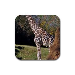 Giraffe Drink Coaster (square)