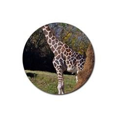 giraffe Drink Coasters 4 Pack (Round)
