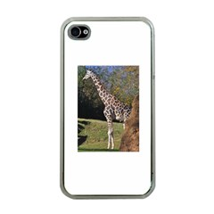 giraffe Apple iPhone 4 Case (Clear)