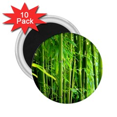Bamboo 2 25  Button Magnet (10 Pack)