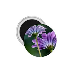Flower 1.75  Button Magnet