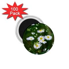 Magic Balls 1.75  Button Magnet (100 pack)
