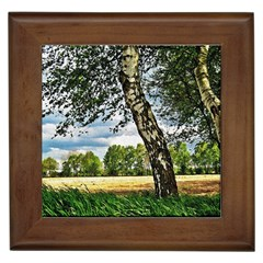 Trees Framed Ceramic Tile