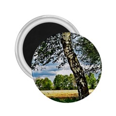 Trees 2.25  Button Magnet