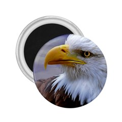 Bald Eagle 2 25  Button Magnet