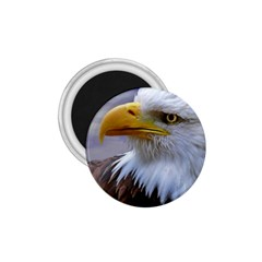 Bald Eagle 1.75  Button Magnet