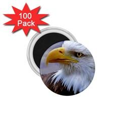 Bald Eagle 1 75  Button Magnet (100 Pack)