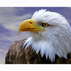 Bald Eagle Canvas 16  x 20  (Unframed)