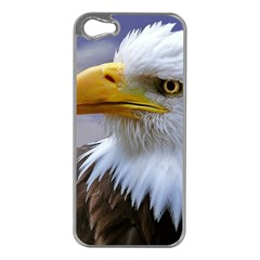 Bald Eagle Apple iPhone 5 Case (Silver)