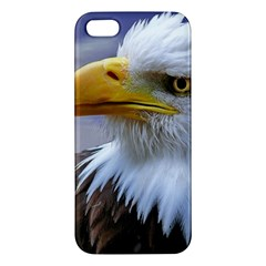 Bald Eagle iPhone 5S Premium Hardshell Case