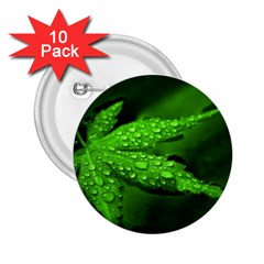 Leaf With Drops 2.25  Button (10 pack)
