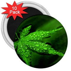 Leaf With Drops 3  Button Magnet (10 Pack)