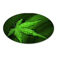 Leaf With Drops Magnet (oval)