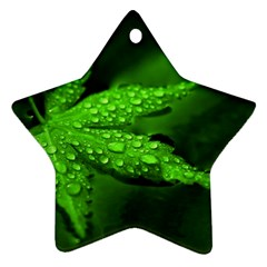 Leaf With Drops Star Ornament (two Sides)