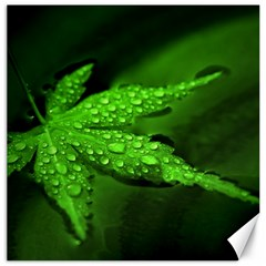 Leaf With Drops Canvas 12  X 12  (unframed)