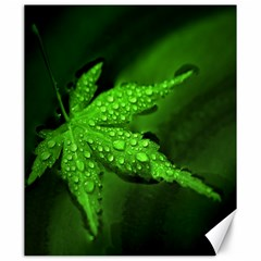 Leaf With Drops Canvas 20  x 24  (Unframed)