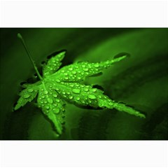 Leaf With Drops Canvas 20  x 30  (Unframed)