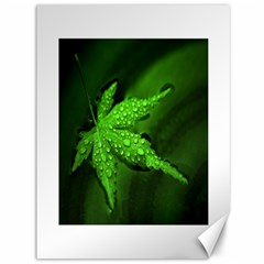 Leaf With Drops Canvas 36  x 48  (Unframed)