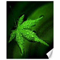 Leaf With Drops Canvas 11  X 14  (unframed)