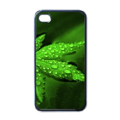 Leaf With Drops Apple iPhone 4 Case (Black)