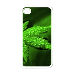 Leaf With Drops Apple iPhone 4 Case (White)