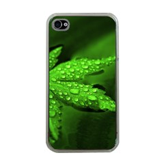 Leaf With Drops Apple iPhone 4 Case (Clear)