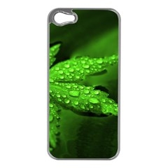 Leaf With Drops Apple Iphone 5 Case (silver)