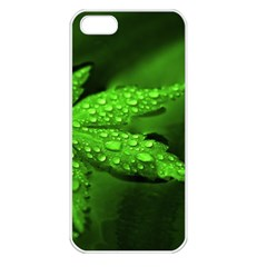 Leaf With Drops Apple iPhone 5 Seamless Case (White)