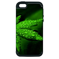 Leaf With Drops Apple iPhone 5 Hardshell Case (PC+Silicone)