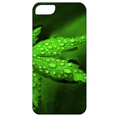 Leaf With Drops Apple iPhone 5 Classic Hardshell Case
