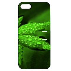 Leaf With Drops Apple iPhone 5 Hardshell Case with Stand