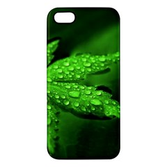 Leaf With Drops iPhone 5 Premium Hardshell Case