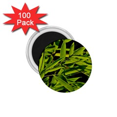 Bamboo 1.75  Button Magnet (100 pack)