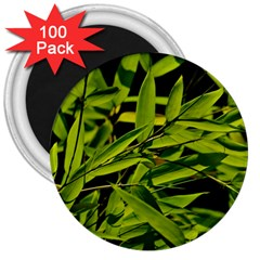 Bamboo 3  Button Magnet (100 Pack)