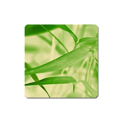 Bamboo Magnet (Square)