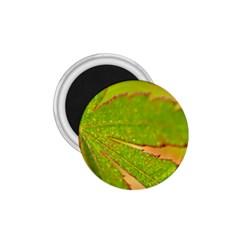 Leaf 1.75  Button Magnet