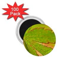 Leaf 1 75  Button Magnet (100 Pack)