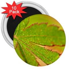 Leaf 3  Button Magnet (10 Pack)
