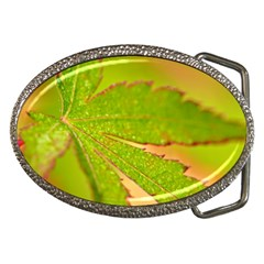 Leaf Belt Buckle (Oval)