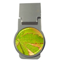 Leaf Money Clip (round)