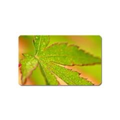Leaf Magnet (Name Card)