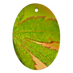 Leaf Oval Ornament (two Sides)