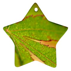 Leaf Star Ornament (Two Sides)