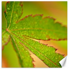 Leaf Canvas 12  x 12  (Unframed)