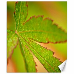 Leaf Canvas 20  X 24  (unframed)