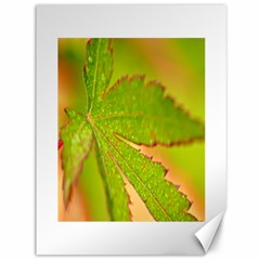Leaf Canvas 36  x 48  (Unframed)